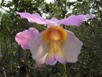 Orchid Trek