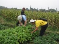 Day 11 : Mai Chau Valley - Ky Son  (B,L,D)